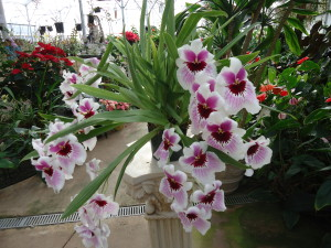 Orchid at Akatsuka Orchid Farm